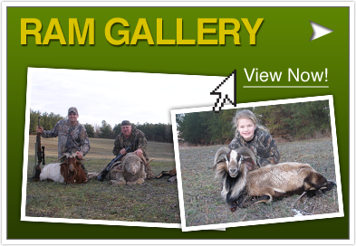 Visit Our Ram Gallery